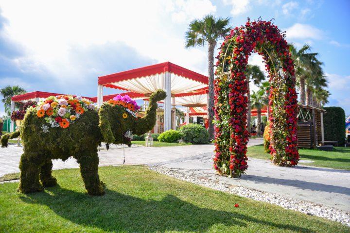 Elephants in Indian Weddings